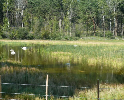 Ritchie Lake
