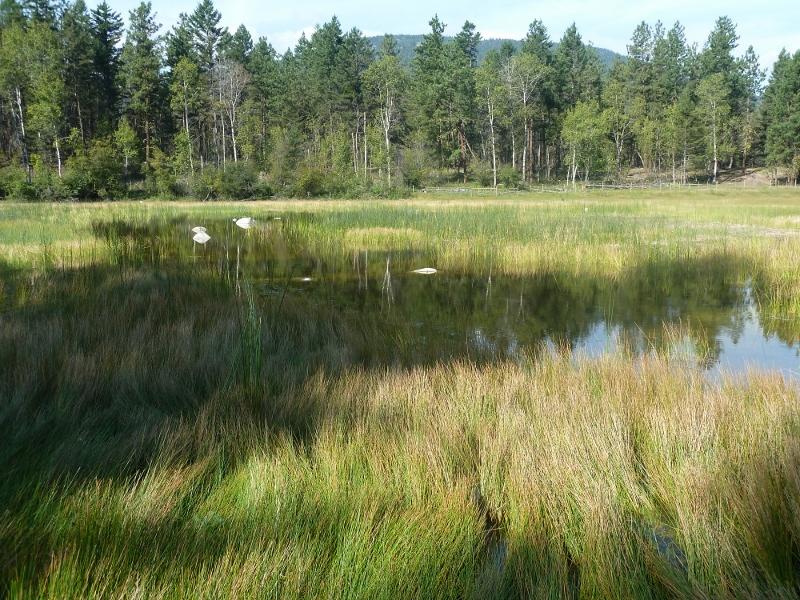 2013 wetland (800x600)